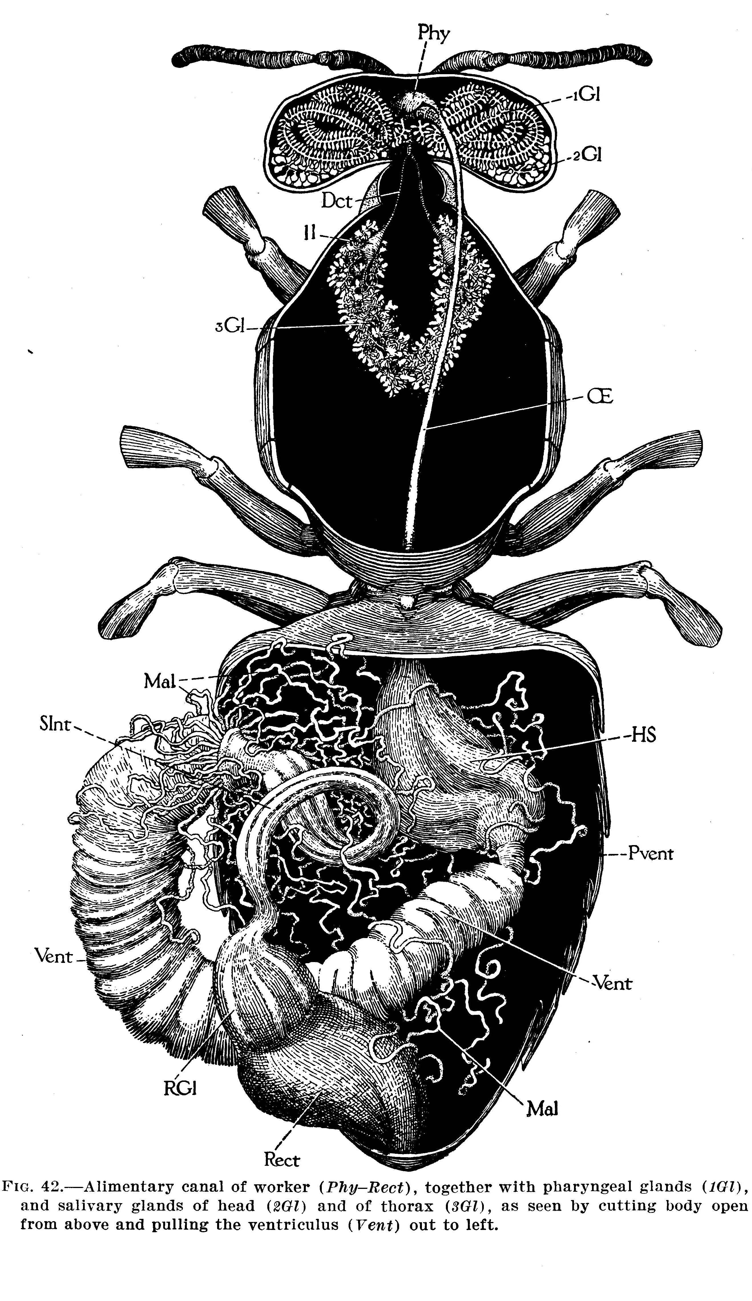 Microscopy Anatomy Ny Bee Wellness Workshops